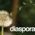 diaspora dandy logo