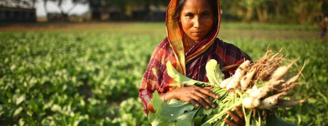 Pakistani farming starved of research funding