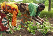Traditional Farming Practices for Enhanced Food Security