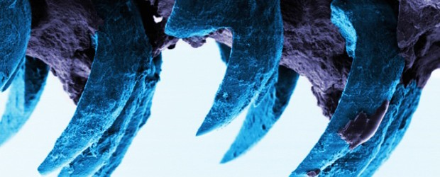 Strongest Natural Material Found