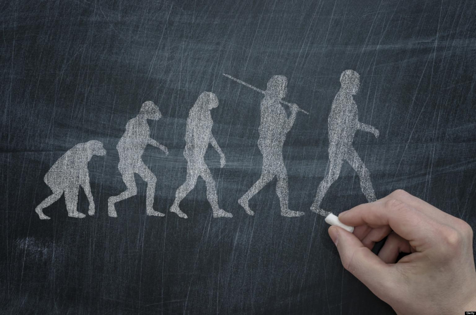 Evolution essay