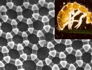 Scientists at KAUST draw inspiration from insects for developing a liquid repellent material