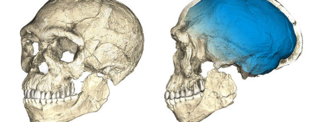 Morocco's Earliest Human Fossils Suggest a Different Timeline of Evolution