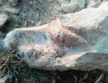 Archeologists in Pakistan unearth a 3.3-million-year-old fossil of extinct Anthracothere